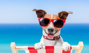 july-dog-days-of-summer-obedience-training-classes-600x417
