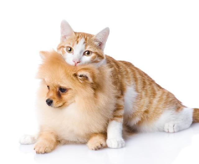 caes-gatos