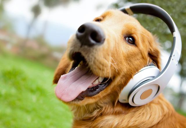 cachorro ouvindo musica